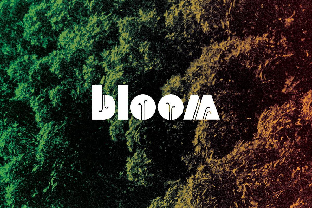 studio-malagon-bloom-festival